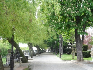 Beautiful,wide tree-lined paseos along the Rio Arlanzon