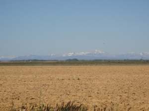 The beautiful Spanish Meseta with snow capped mountains along the northern horizon.
