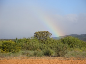 View this morning as we left Astorga and into the countryside.